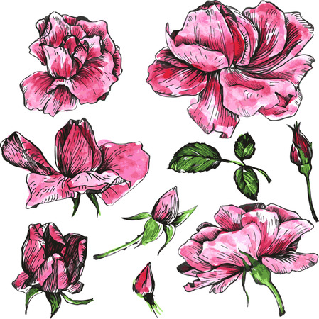 flower rose: flowers of pink roses, drawn by watercolor, isolated pink roses flowers, buds and leaves, hand drawn design elements