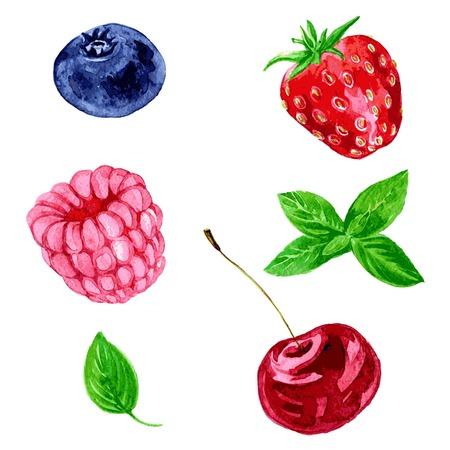hierba buena: conjunto de diferentes bayas, frambuesa, cereza, ar�ndano, fresa y hojas de menta, dibujo de la acuarela, dibujado a mano ilustraci�n vectorial