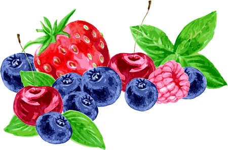 still life with different berries, composition with raspberry,cherry,blueberry, strawberry and leaves of mint,drawing by watercolor,hand drawn vector illustration