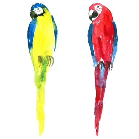 two macaw parrots painted by watercolor, yellow and blue ara, red and blue ara, hand drawn vector illustration