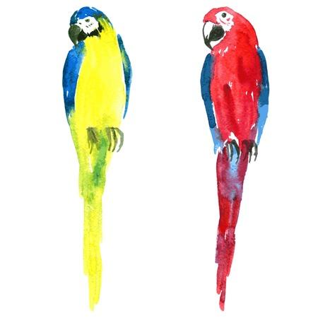 cotorra: dos loros guacamayos pintado por la acuarela, ara amarillo y azul, rojo y azul ara, dibujado a mano ilustración vectorial