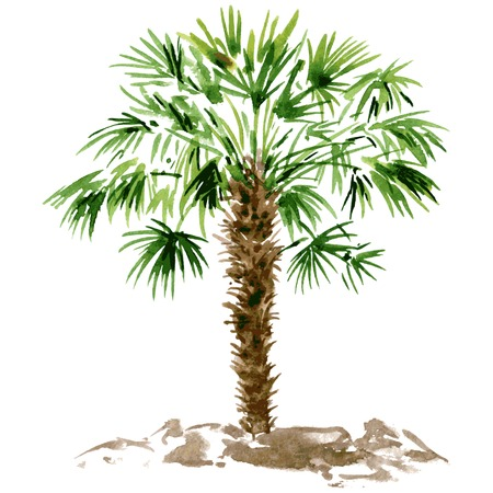 palmetto: watercolor drawn palm tree, hand painting vector illustration