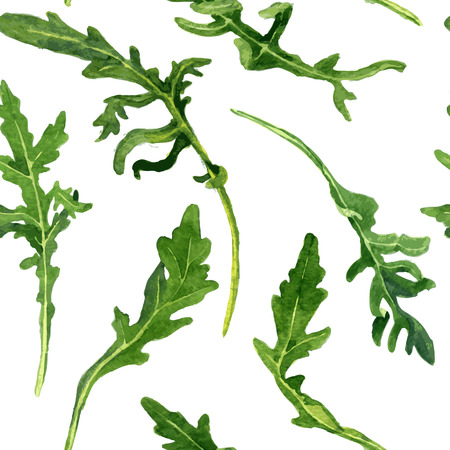 白い背景に、手描きのベクトル図に水彩で描くルッコラの緑の葉とのシームレスなパターンをベクトルします。