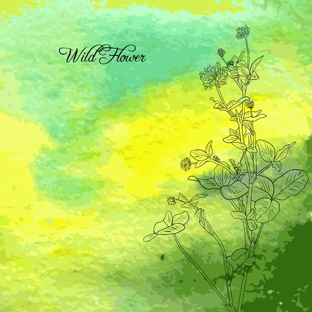 Floral conposition with line drawing clover at green watercolor background, wild flowers at green abstract background, hand drawn vector illustration 일러스트