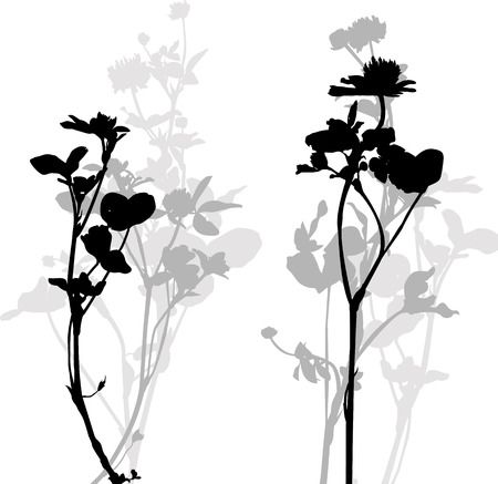 botanica: Silhouette of herbs and flowers, hand drawn vector illustration
