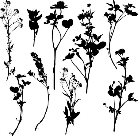 botanical medicine: Set of silhouette by herbs and flowers, hand drawn vector illustration