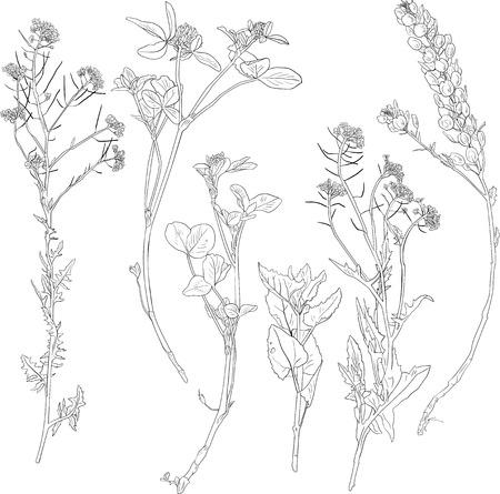 Set van lijntekening kruiden, wilde bloemen, met de hand getekende vector illustratie