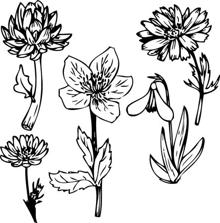 line drawing: Set of line drawing flowers, hand drawn vector illustration Vettoriali