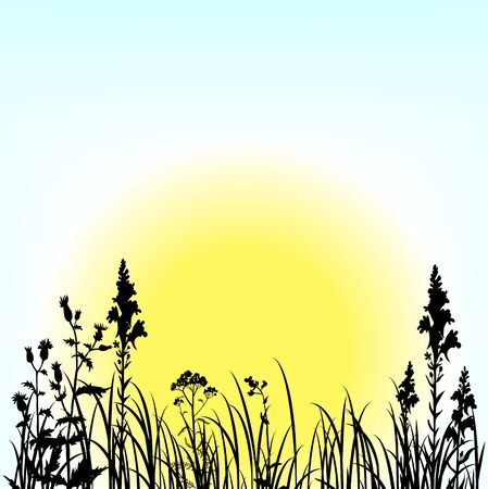 silhouettes  of flowers and grass and rising sun, vector illustration 向量圖像