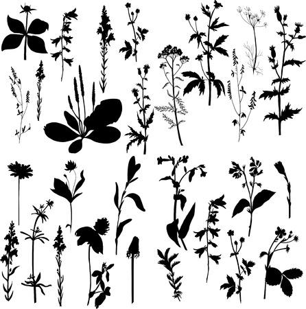 conjunto de siluetas de flores y la hierba, ilustración vectorial