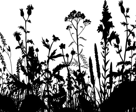 grass vector: silhouettes  of flowers and grass, vector illustration