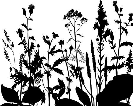 Line Drawing Grass : Drawing beautiful lotus leaf decorative series stock illustration