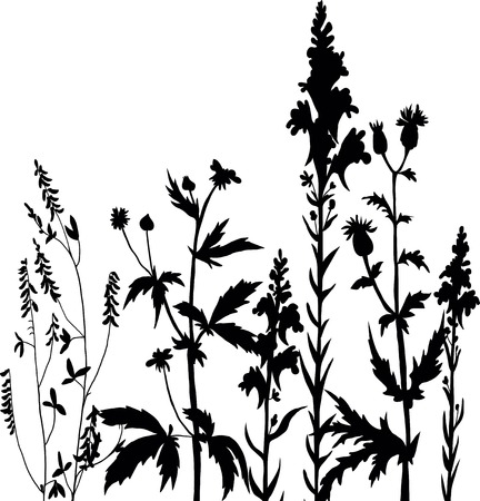 herb garden: Silhouettes  of flowers and grass, vector illustration