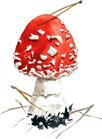 grebe: amanita,poisonous mushroom,darwing by watercolor,hand drawn vector illustration