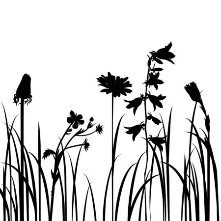 campanula: Silhouettes  of flowers and grass, vector illustration