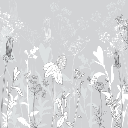 meadow flower: monochromeline drawing herbs , vector illustration