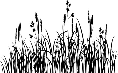 Silhouettes of grass, hand drawn vector illustration