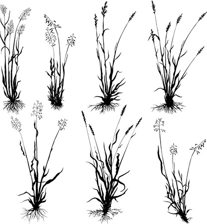 Set of grass silhouettes with roots, ears of grass, hand drawn vector illustration