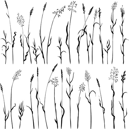 Set of grass silhouettes, ears of grass, hand drawn vector illustration