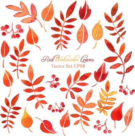 vector set of red autumn watercolor leaves and berries, hand drawn design elements 일러스트