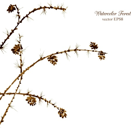 larch: watercolor branches of larch with needles and pine cones, hand drawn vector illustration