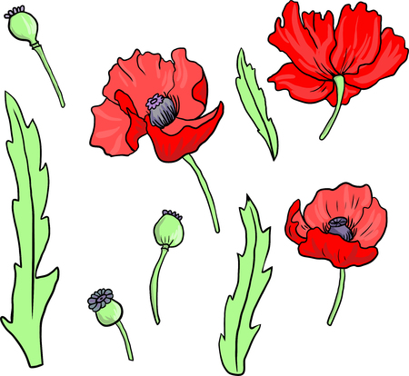 24856 poppy flower stock vector illustration and royalty free poppy set of linear drawing poppy flowers hand drawn vector illustration mightylinksfo