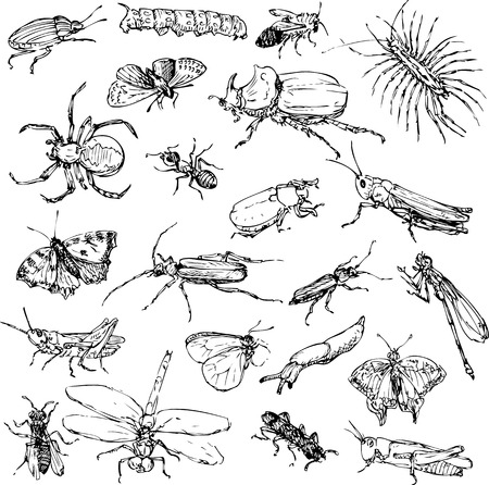 crawling animal: set of line drawing insects, hand drawn vector illustration
