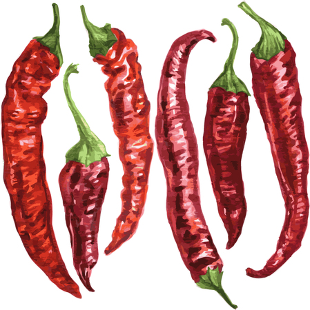 set of red chili pepper drawing by watercolor at white background, hand drawn vector illustration
