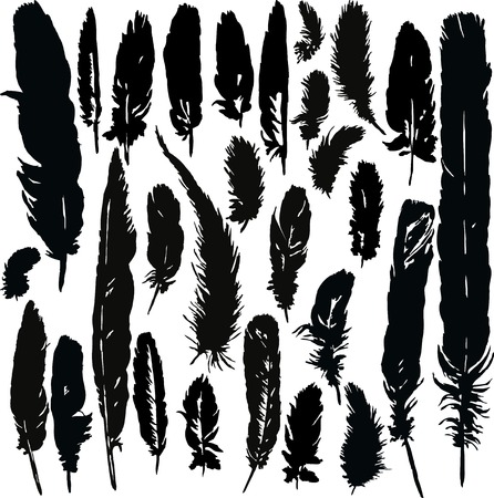 crow: set of silhouettes by plumes, hand drawn feathers,vector illustration