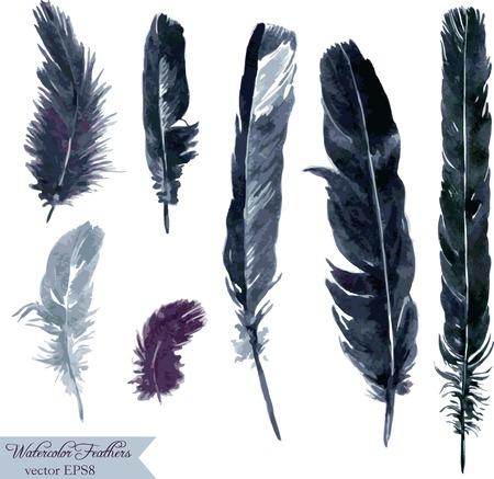 cuervo: conjunto de plumas, plumas de dibujo acuarela, dibujado a mano ilustraci�n vectorial Vectores