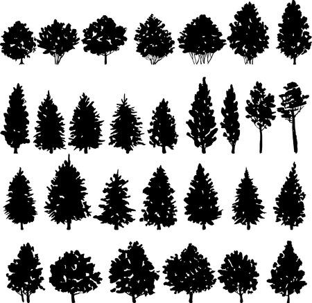 arbol de pino: conjunto de siluetas de los árboles, dibujado a mano ilustración vectorial Vectores