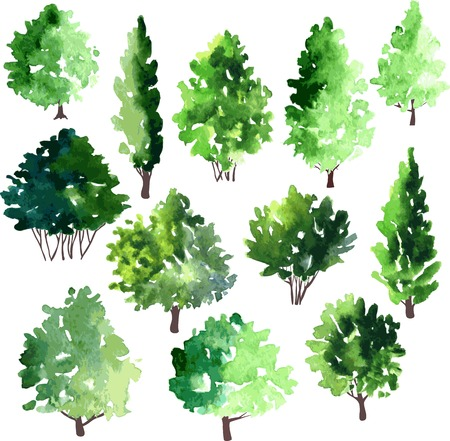 forest trees: set of different deciduous trees, vector illustration