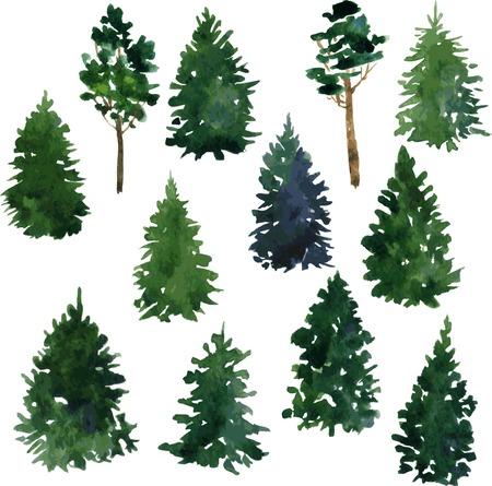 arbol de pino: conjunto de conjunto de árboles de coníferas dibujo de acuarela, ilustración vectorial Vectores