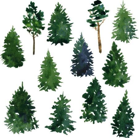 pine green: set of set of conifer trees drawing by watercolor, vector illustration
