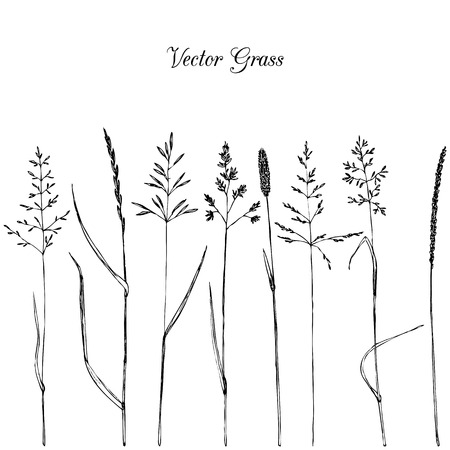 Set of line drawing grass,isolated hand drawn wild cereals,ink drawing vector illustration