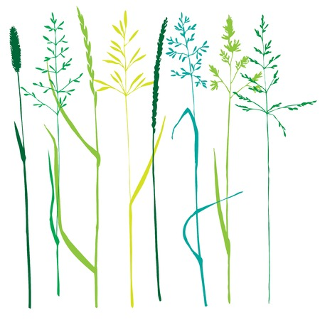 oat field: Set of grass silhouettes,isolated hand drawn wild cereals, vector illustration Illustration