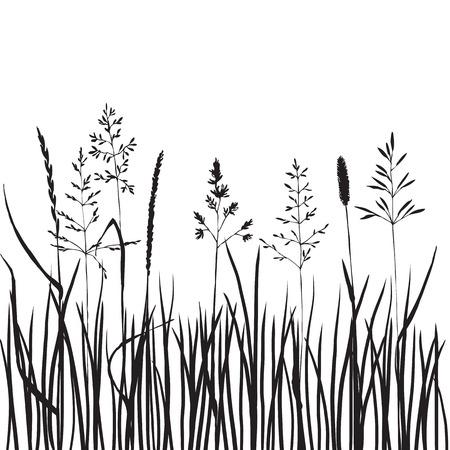 herbe silhouettes noires, tiré par la main céréales sauvages, prairie plantes sauvages, illustration vectorielle