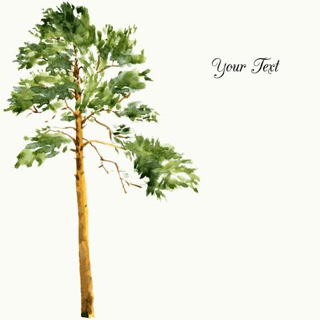 Alto albero di pino a giornata di sole disegno di acquerello, acquerello abbozzo di natura selvaggia, la pittura foresta, illustrazione vettoriale mano disegnato Archivio Fotografico - 42017269