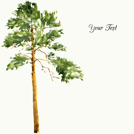 high pine tree at sunny day drawing by watercolor, aquarelle sketch of wild nature, painting forest, hand drawn vector illustration Иллюстрация