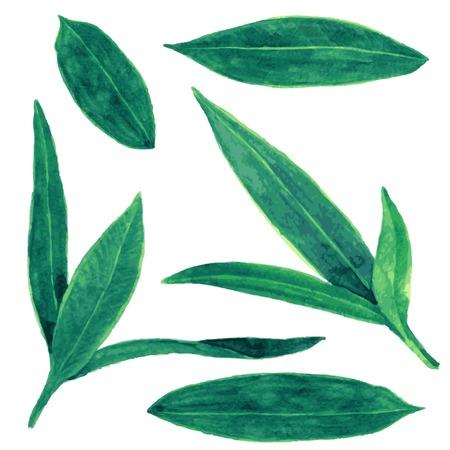 laurier rose: ensemble de vert abstrait laisse dessin en aquarelle, �l�ments vectoriels dessin�s � la main