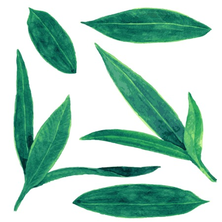 oleander: set of abstract green leaves drawing by watercolor, hand drawn vector elements Illustration