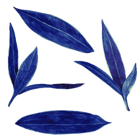 oleander: set of abstract dark green and blue leaves drawing by watercolor, hand drawn vector elements