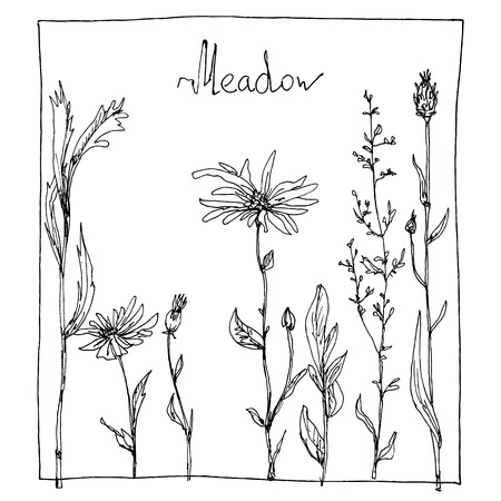 thickets: floral composition with ink drawing herbs and flowers in the square, doodle wild plants, monochrome black line drawing floral card, hand drawn vector illustration Illustration