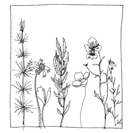 floral composition with ink drawing herbs and flowers in the square, doodle wild plants, monochrome black line drawing floral card, hand drawn vector illustration Illusztráció