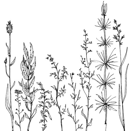 floral composition with ink drawing herbs and flowers, doodle wild plants, monochrome black line drawing floral card, hand drawn vector illustration