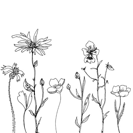 marguerite: floral composition with ink drawing daisy flowers, doodle wild plants, monochrome black line drawing floral card, hand drawn vector illustration