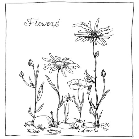 chamomel: floral composition with ink drawing herbs and flowers in the square, doodle wild plants, monochrome black line drawing floral card, hand drawn vector illustration Illustration