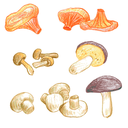 edible: vector set of food drawing by color pencil, doodle mushrooms, hand drawn vector elements