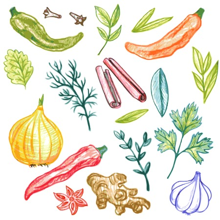trimmings: vector set of spices drawing by color pencil, doodle foods, hand drawn vector elements Illustration