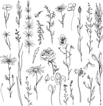 floral doodle set of ink drawing herbs,leaves and flowers, doodle wild plants, monochrome black line drawing floral collection, hand drawn vector illustration